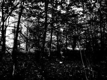 Blair Witch –  Adam Wingard